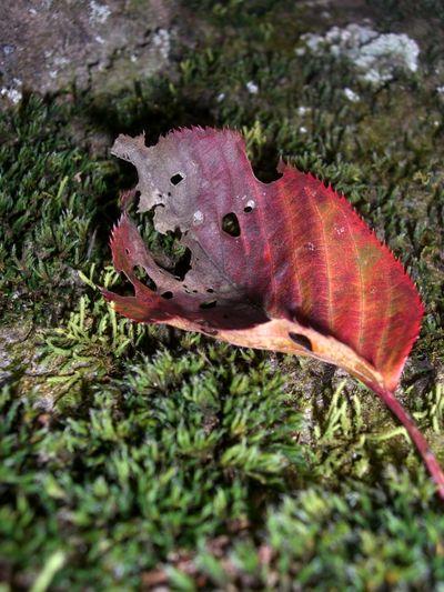 木に生えるコケと落葉.jpg